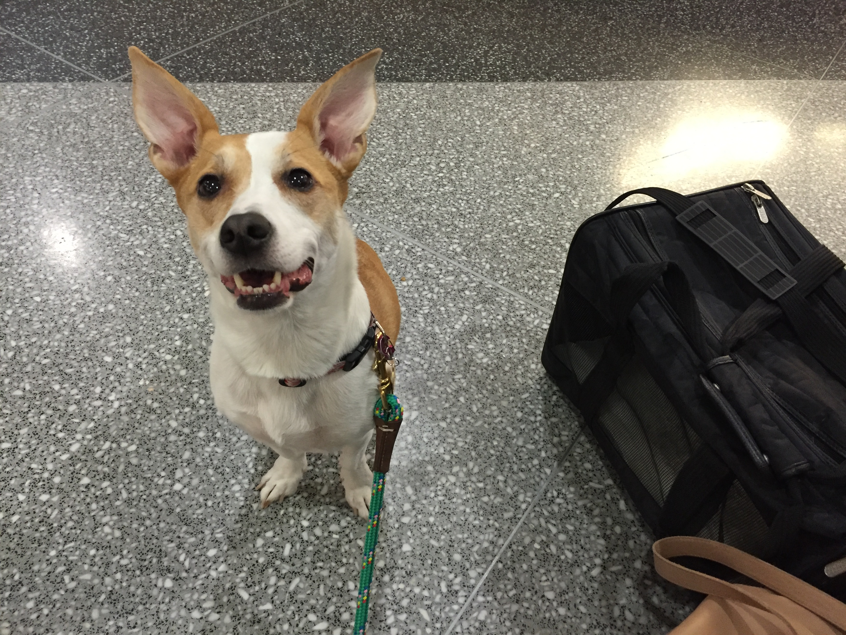 5 Tips for Traveling with Pets.